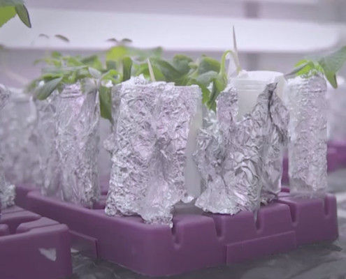 Plant communication @ LINV