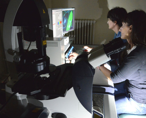 Confocal Laser Scanning Microscope Clsm Linv