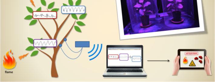 Plants as biosensors