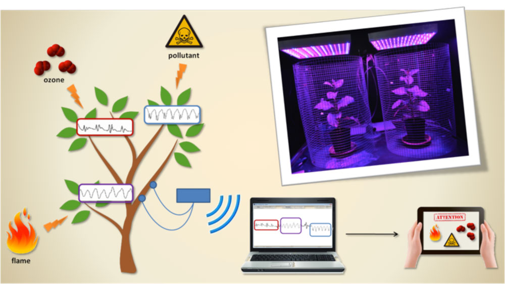 PLants Employed as Sensor Devices
